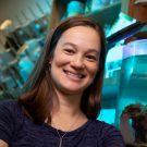 As an Alfred P. Sloan Fellow, Assistant Professor Rachael Bay will research thermal tolerance in corals, which is becoming increasingly important as ocean temperatures shift.